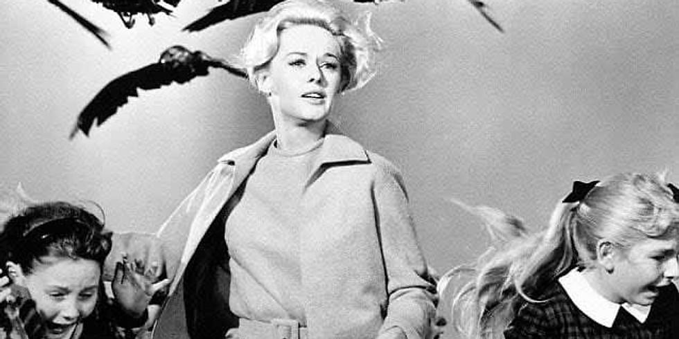 """Cinema Rondinella - """"Gli uccelli"""" di Alfred Hitchcock"""
