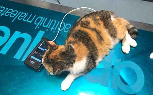 misurazione pressione cane e gatto