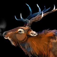 Chilly Night Elk