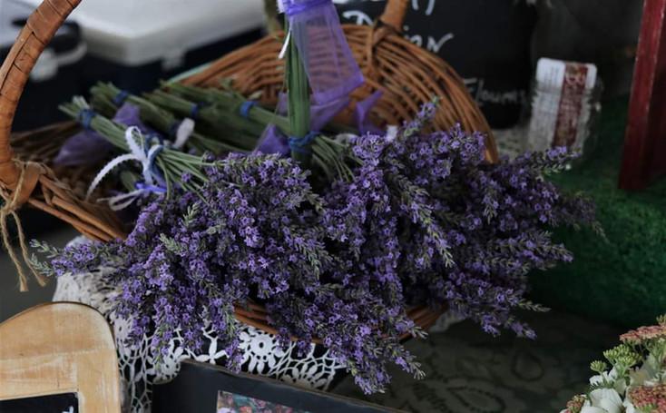 Brian Keller - Lavender 6.19.21.jpg