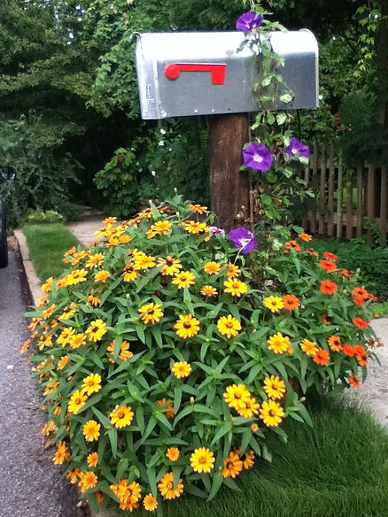 Tim Wolfe Design, morning glory, landscape designer, atlanta, decatur, mailbox, garden design atlant