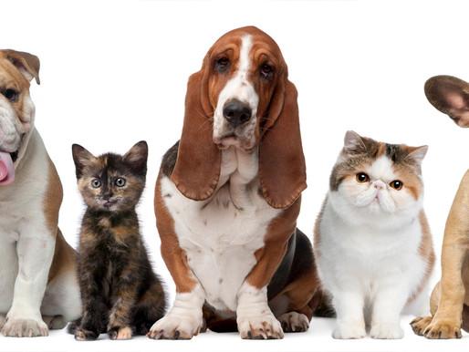 5 ideas curiosas para que tu mascota tenga un espacio exclusivo en casa