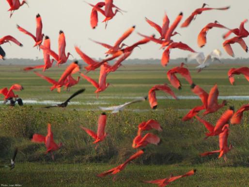 En estas vacaciones ¡El plan es avistamiento de aves en Acacías!