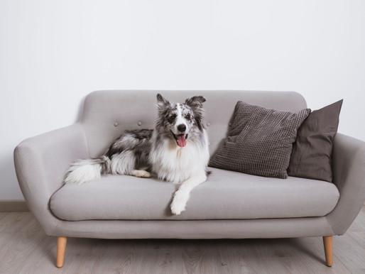 ¿Qué hacer para que tu perrito se quede solo en casa por un tiempo y sin problemas?
