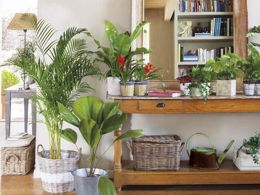 Decora con plantas para hacer de tu hogar un rincón de ensueño