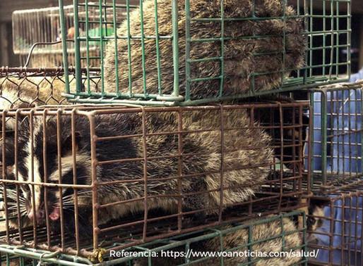 Respetar la vida silvestre y los ecosistemas, acciones necesarias para evitar futuras Pandemias