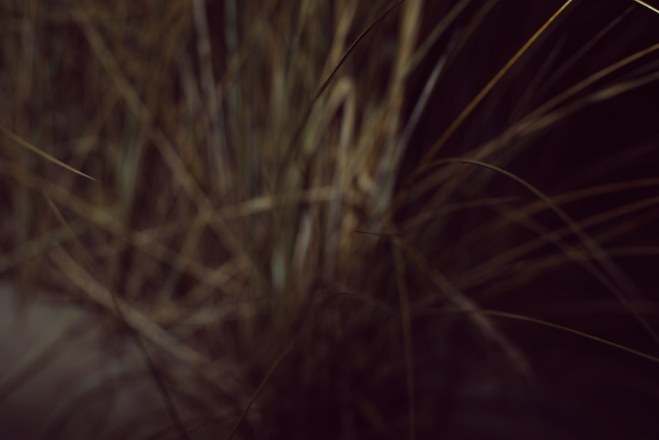 Grass by PHOTO MOTIF