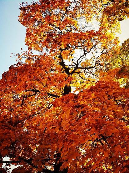 Jahreszeiten by PHOTO MOTIF