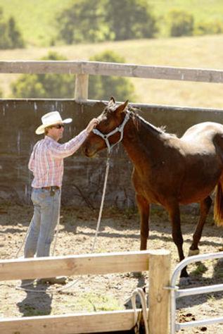 WB Stallion