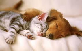 Castração de cães e gatos pode ser realizada no Centro de Controle de Zoonoses