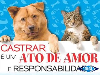 Mutirão de Castração de Cães e Gatos dias 14 e 15 de novembro