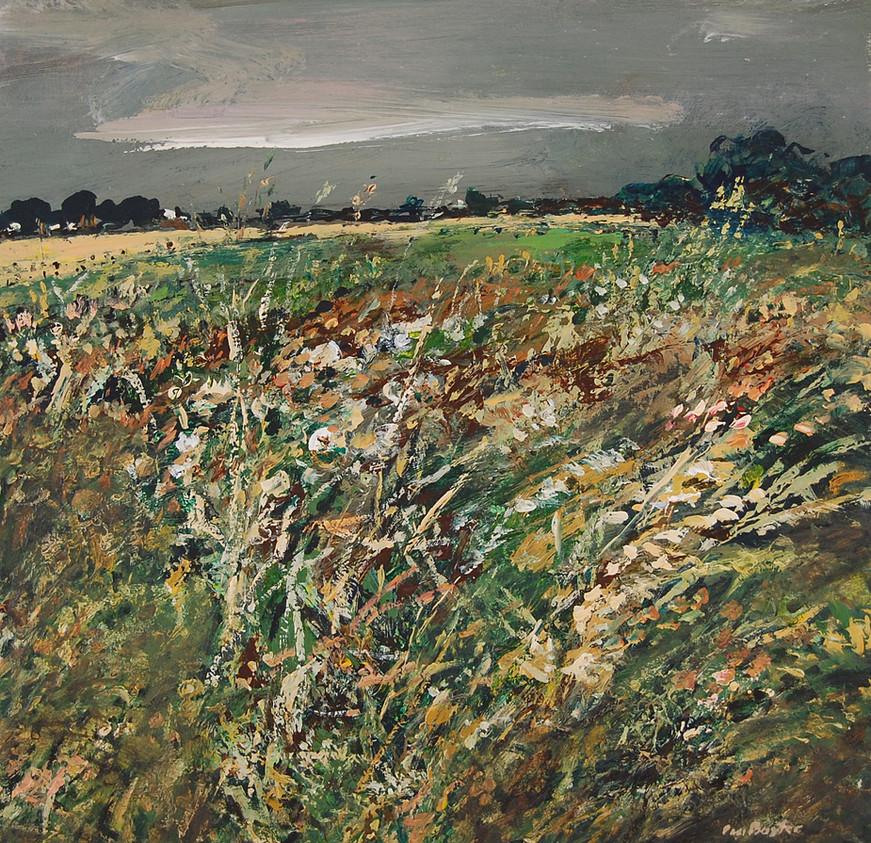 Summer Fields at Kinleith Farm.jpg