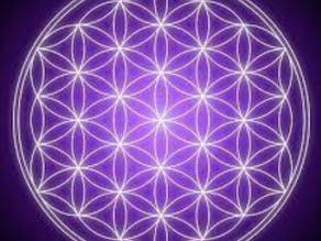The Flower of Life – By Priti Mistry.