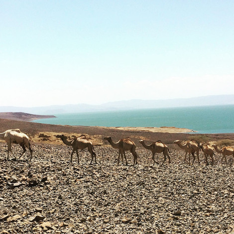 What to do in Turkana - Koros Camp