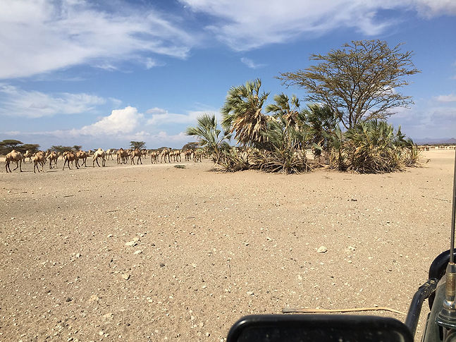 Visit the Kalacha Desert Oasis near Koros Camp in Turkana, Kenya - what to do in Turkana