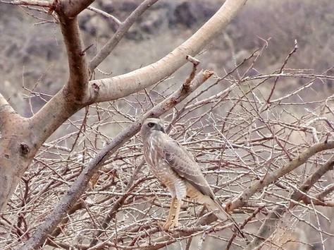 bird-watching-at-koros-camp-kenya-things-to-do-in-turkana