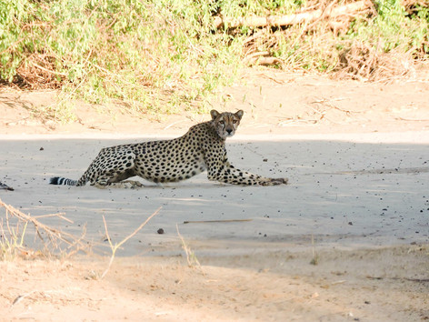 things-to-do-in-turkana-spot-wildlife-at-koros-camp-kenya