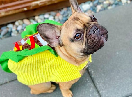 12 of the best Vancouver dog Halloween costumes