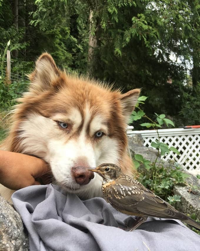 One of the Dog Dudes' dogs staring at a bird peacefully