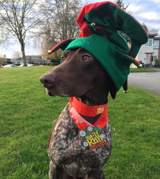 Dog at the Vancouver Elf Run