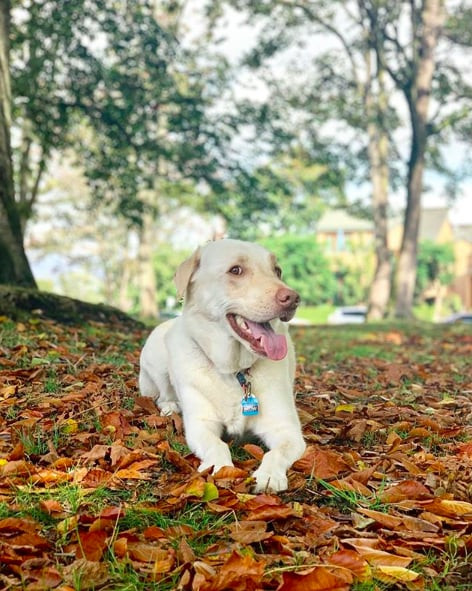 Dog at a park in Kitsilano, top five Vancouver fall spots