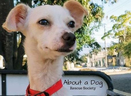 Local rescue shares why Vancouver has seen a spike in dog adoptions during COVID-19