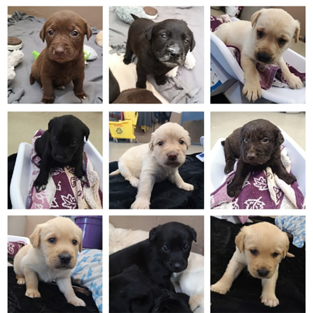 9 puppies and injured mom rescued in fort St John