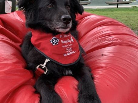 Meet the volunteer therapy dogs helping young people to read in Vancouver