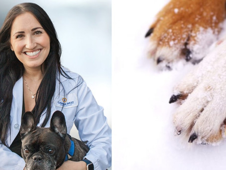Canada West Veterinary Specialists warn pet owners about the dangers of cold weather