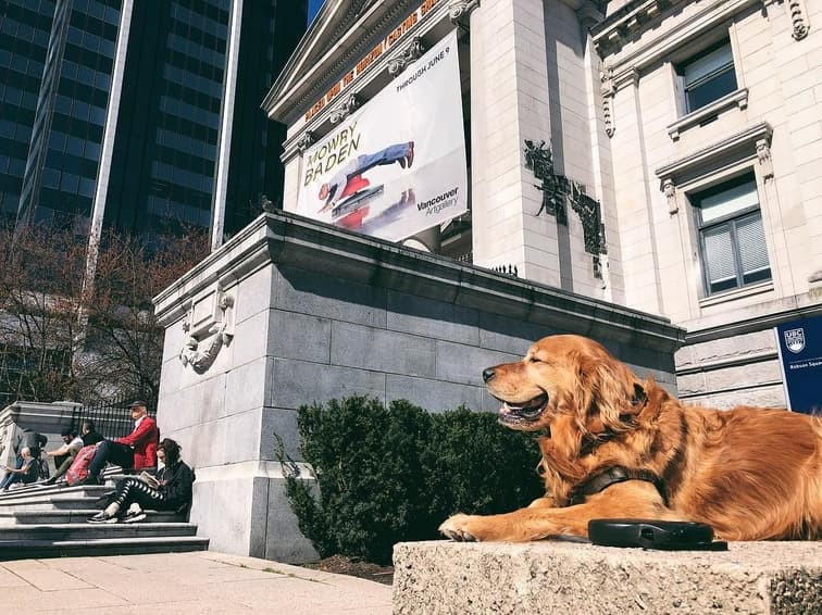 Dog laid down in front of Vancouver Art Gallery