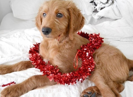7 reasons your dog makes a better  Valentine's Day date