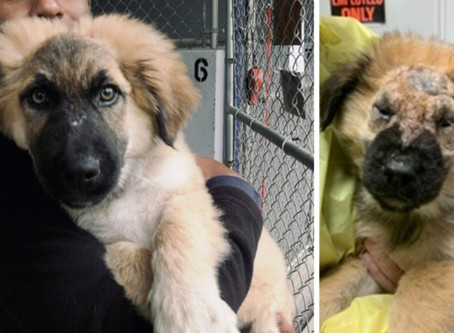 Puppies abandoned near Port Alberni have now all found loving homes