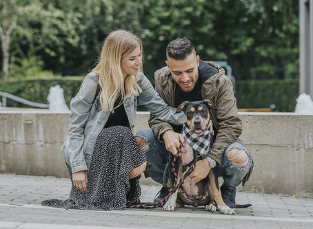 Think pet insurance isn't worth it? Think again. Vancouver dog owner shares his story.