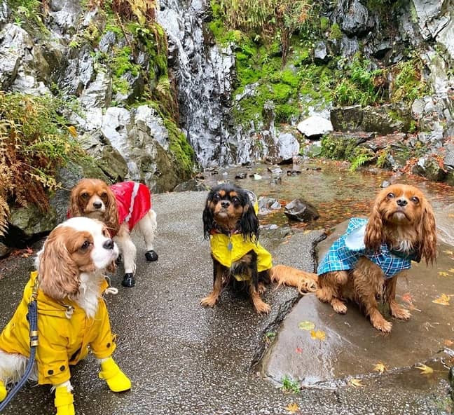 The favourite place for these four dogs is Queen Elizabeth Park, one of the top dog friendly plan in Vancouver