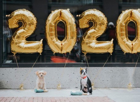 How to Celebrate New Year's Eve with Your Dog As Your Date