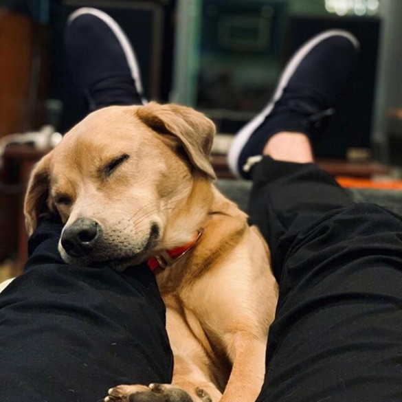 Dog sleeping on his owner lap, who is wearing Vessi sneakers