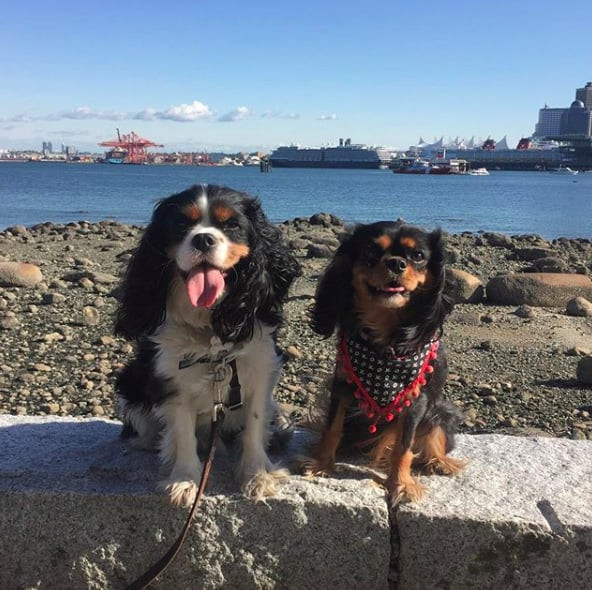 Stanley Park with two pups, one of the best Vancouver fall spots to go