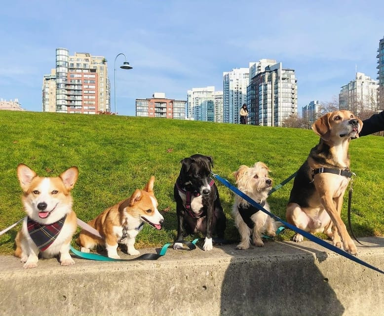Five dogs at David Lam Park, one of the most popular dog friendly attractions in Vancouver