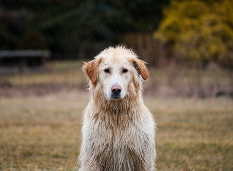 Tips for Vancouver dogs who refuse to do their business in the rain