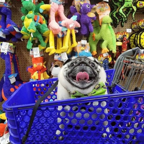 Funny dog on a cart at PetSmart store