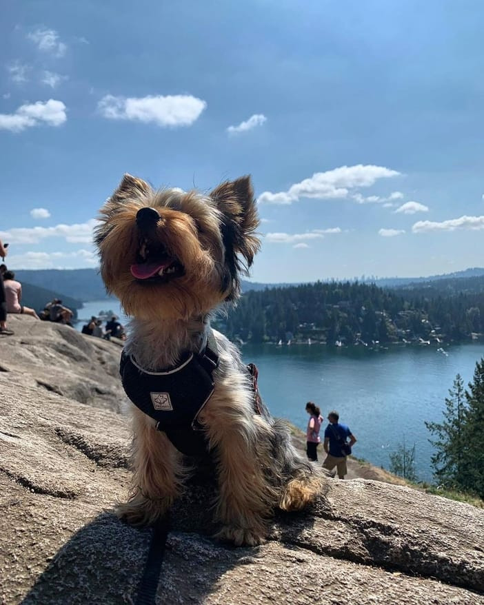 Dog enjoying Deep Cove as one of the top Vancouver tourist attractions for dogs