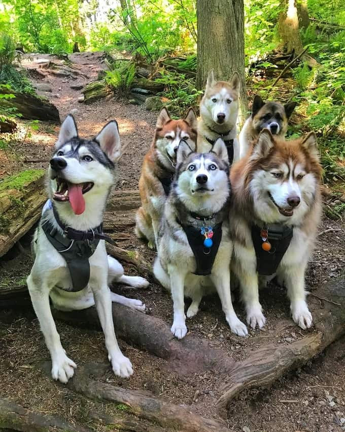 Dog squad paying attention to the Dog Dudes