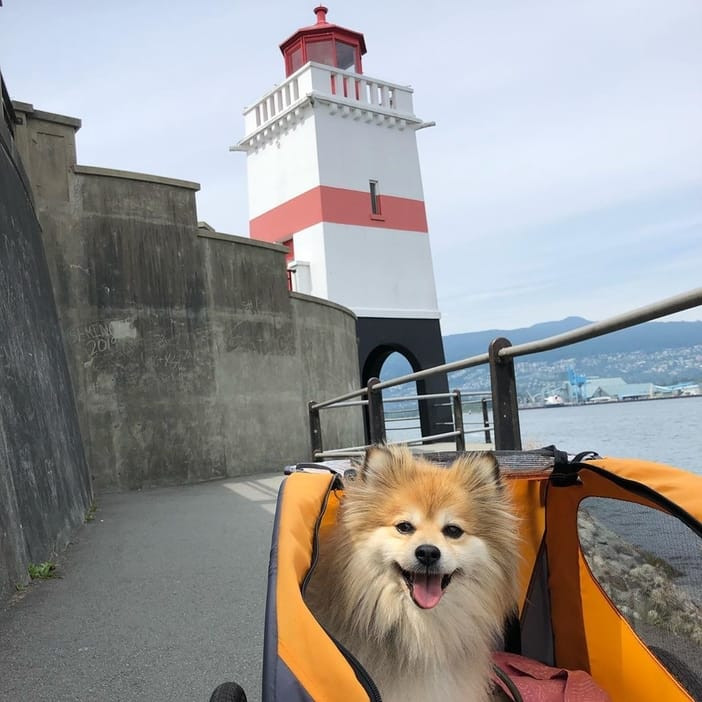 Dog in its cart enjoying the view of Stanley Park Seawall