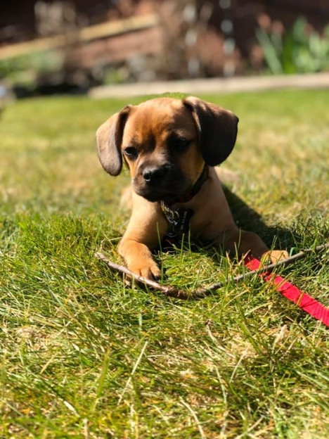 Lauren's new pup, Oakland, enjoying at the park