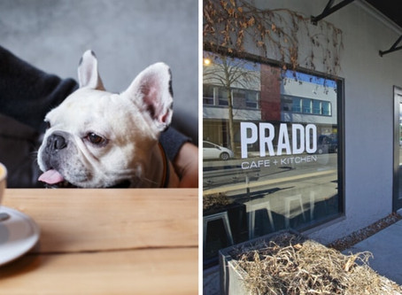 Second dog-friendly coffee crawl announced for next month in Vancouver