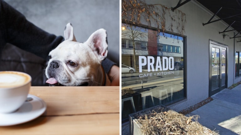 The second Canine Coffee Crawl event is happening in Vancouver