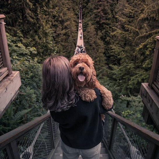 Dog in the arms of its owner enjoying Capilano Suspension Bridge