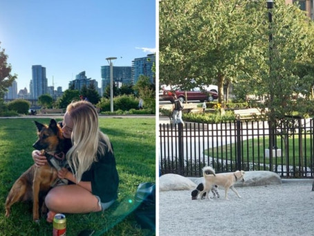 As 7 Vancouver dog parks reopen, should we flock to them?