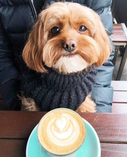 Canine Coffee Crawl in Vancouver