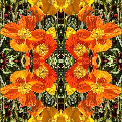 'Florascopes VI' by Tanya Rose